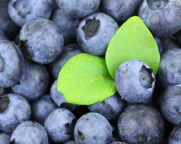 Blåbär - blåbär kan minska bukfetma och andra riskfaktorer för sjukdomar.