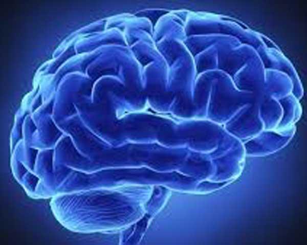 Hjärna - blåbär förbättrar minne och kognition.