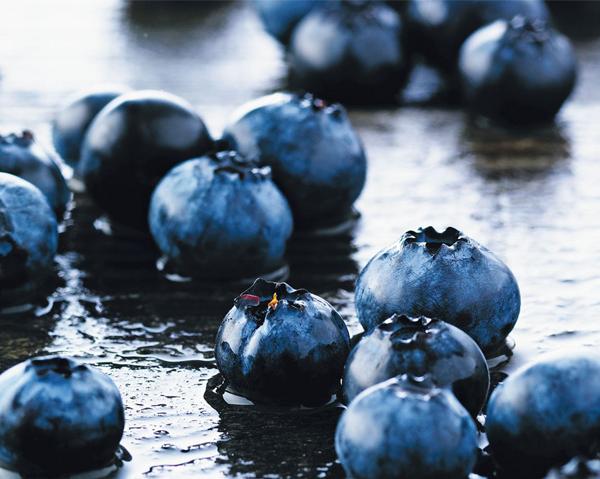 Blåbär - blåbärets antocyaniner kan föryngra hjärnan.