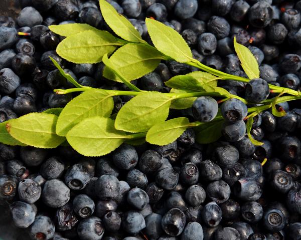 Blåbär och blåbärskvist - träningen ger mer med blåbär